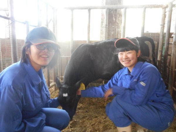 畜産実習_子牛の管理