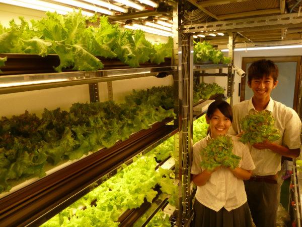 野菜の栽培実習13